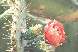 Summer Cactus Flower Close-Up