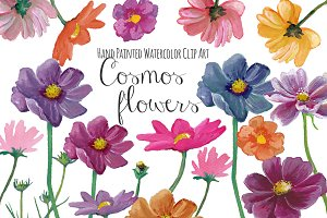 Cosmos flowers watercolor clipart