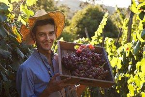 farmer in the grape harvest