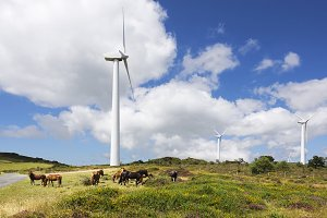 wind turbines with horses