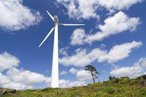 wind turbines in eolic farm