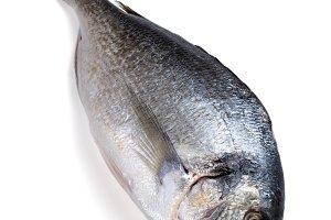 Raw fish Dorado