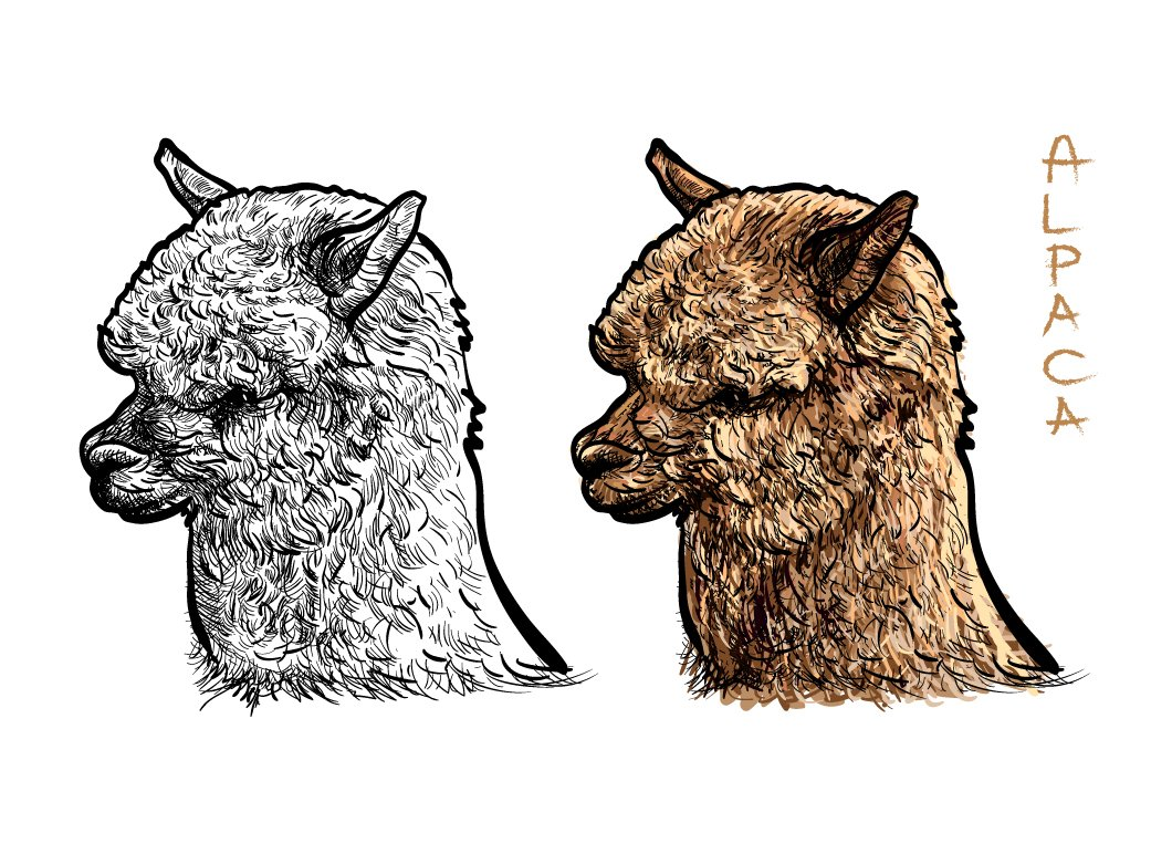 Alpaca ~ Illustrations ~ Creative Market