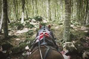 Horse pulling the cart in the woods