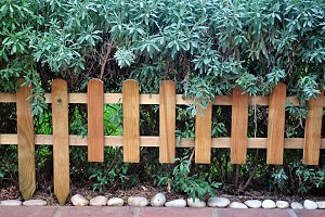 fence and hedge lavender