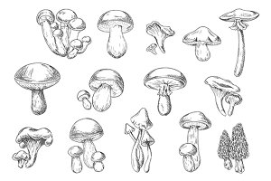 Forest mushrooms sketches