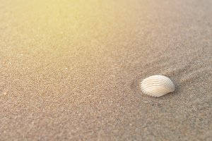 Shell on sand at beach