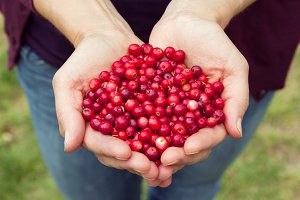 Woman hands full of berries