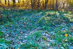 First hoarfrost on grass.