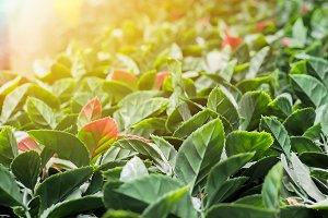 Decorative leaves with beautiful sun light