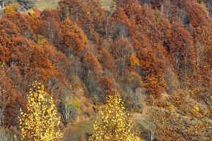 Autumn  Carpathian mountain scenery