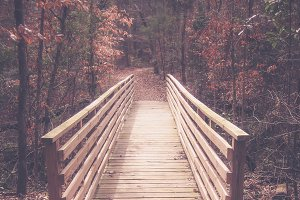 Bridge in Woods