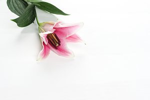 pink lily flower pedals on white background - landscape view