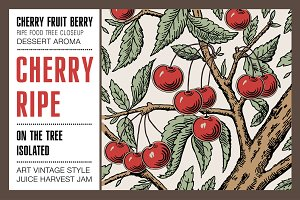Cherry ripe fruit food tree isolated