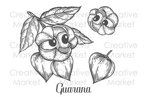 Hand drawn guarana set