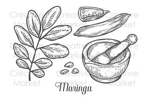 Hand drawn moringa set