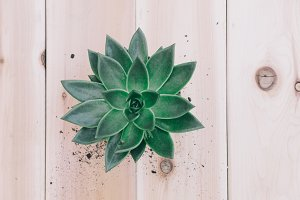 Succulent Flatlay on Wood 4