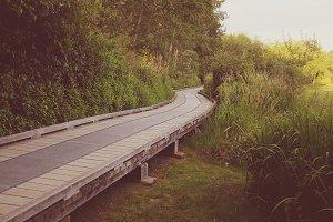 Serene path