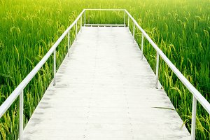 Walkway into the Green Rice Field