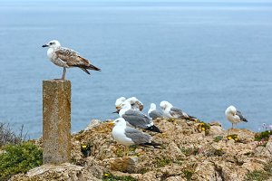 Seagulls on summer rocky coast