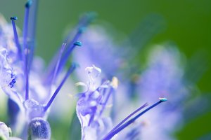 Small, Blue, Flower, Green, Portrait