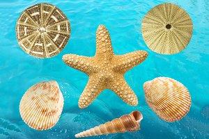 Set of 6 seashells