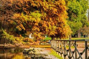Beautiful autumn trees and lake