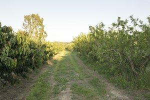 Field Miravet