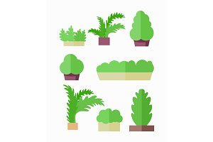 Decorative Plants Illustrations