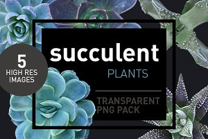 Succulents - Transparent Pngs