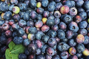 Blueberries from the Farm 2