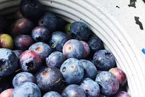 Blueberries from the Farm 1