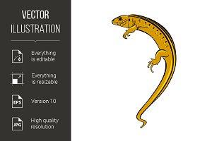 Lizard a gecko