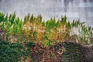 huge colorful wall with wild grapes