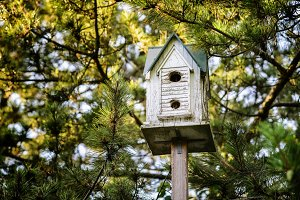wooden birdhouse at pine forest
