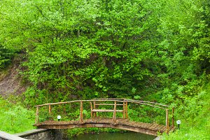 nature with wooden bridge and bushes