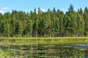 Summer Lake Ruotsalainen (Finland).