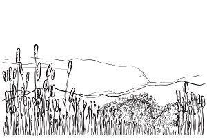 Hand drawn landscape with reed