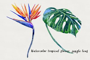 Watercolor tropical flower,leaf