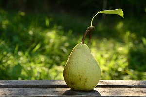 pears one on nature background