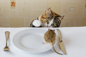Cat playing with little gerbil mouse on the table with serving cutlery. Concept of prey, food, pest.