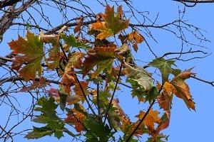 autumn maple bouquet