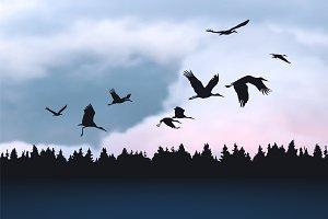 Stork flock