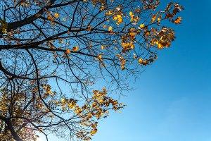 Fifteen sparrows on an autumn tree