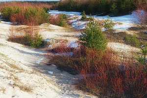Sand dunes of the Baltic Sea