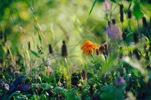 Wild flowers growing in green grass meadow with blurred bokeh background. Autumn nature