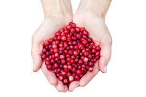 Hands holding lingonberries