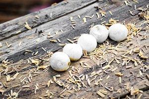 Gecko eggs