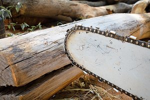carpenter use Saw