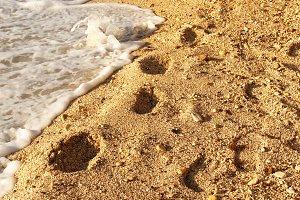 Footprints on the golden beach